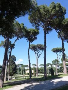 ボルゲーゼ荘の松